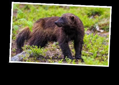 wyprawa na niedźwiedzie