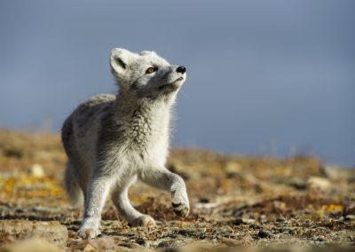 Fotowyprawa Szpicbergen, Svalbard