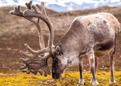 rejs fotograficzny na Spitsbergen