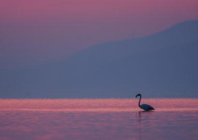 28_Pelikany Kędzierzawe Kerkini - wyprawa fotograficzna