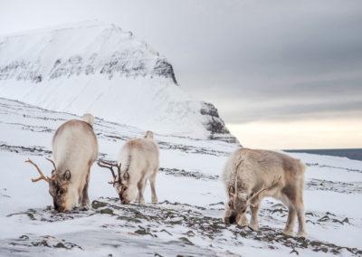 Fotowyprawa Spitsbergen, Svalbard