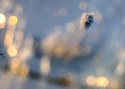 1_Pelikany Kędzierzawe Kerkini - wyprawa fotograficzna